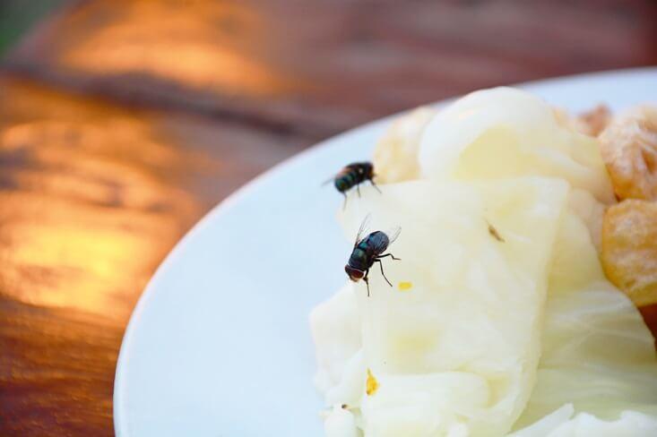 Penyebab Serangga Betah di Rumah dan Tips Menghindarinya