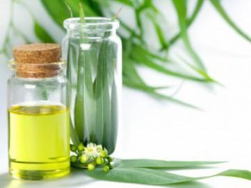 Manfaat Eucalyptus, Salah Satunya Bisa Dijadikan Disinfektan Spray, Lho!